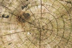树干圈子 免版税图库摄影