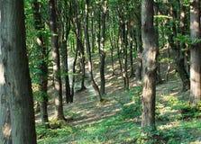 树干在一个绿色森林里 免版税库存图片