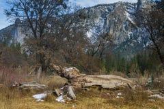树干在优胜美地公园 库存图片