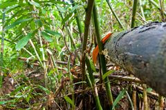 树干在密林 免版税库存照片