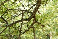 树干在森林里 免版税库存图片