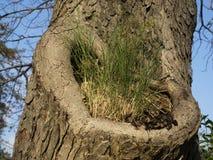 树干在森林里 库存照片
