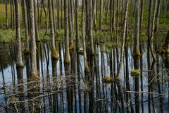 树干在水池构造了背景样式 免版税库存图片
