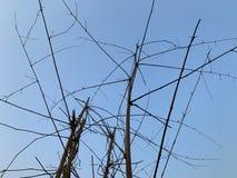 树干在清楚的天空蔚蓝交错作为抽象背景和墙纸 免版税库存照片