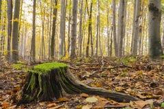 树干在秋天森林里 免版税库存图片