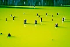 树干在美丽的绿色湖 库存照片
