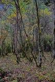 树干在颜色森林里 免版税库存照片