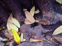 树干基地黑暗的水流失水池,下落的叶子 免版税图库摄影