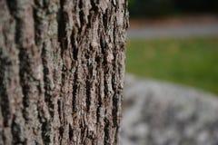 树干有blury背景 免版税库存照片