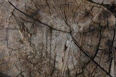树干木头背景,老被风化的灰色颜色木杉木树干 库存照片
