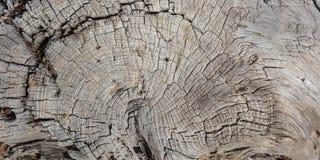 树干木头背景,老被风化的灰色颜色木树桩 库存图片
