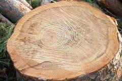 树干木头 免版税库存图片