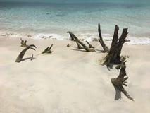 树干海湾海滩 免版税库存图片