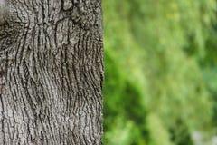 树干灰色绿色纹理 库存图片