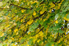 树干燥叶子自然风景 库存照片