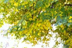 树干燥叶子自然风景 库存图片