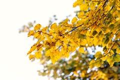 树干燥叶子自然风景 免版税库存图片