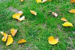 树干燥黄色叶子背景在绿草的 库存图片