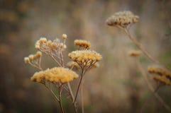树干燥黄色叶子背景在绿草的 免版税图库摄影