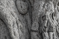 树干特写镜头笨拙的老木头 自然地灰色背景 库存图片