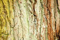 树干特写镜头 库存照片