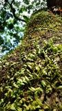 树干的小植物 库存照片