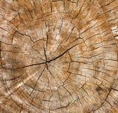树干的木纹理,背景纹理 免版税库存图片
