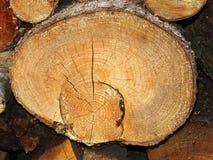 树干的末端 免版税库存图片