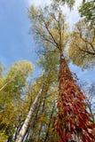 树干的神秘的风景,包裹在色的叶子o 库存照片