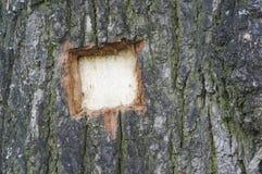 树干的纹理 免版税库存图片