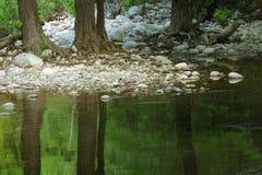 树干的美丽如画的反射在一片温带林的一个美丽的池塘 免版税库存图片