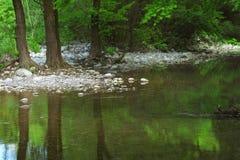 树干的美丽如画的反射在一片温带林的一个美丽的池塘 免版税库存照片