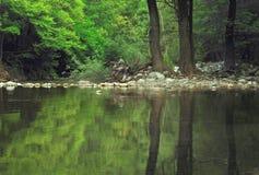 树干的美丽如画的反射在一片温带林的一个美丽的池塘 库存图片