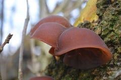 树干真菌 免版税库存图片
