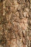 树干纹理宏指令射击 免版税图库摄影