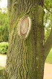 树干纹理宏指令射击 免版税库存照片