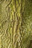 树干纹理宏指令射击 库存照片