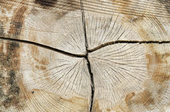 树干纹理  库存照片