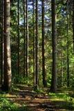 树干结构树 免版税库存照片