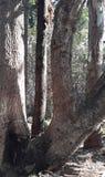 树干结构 库存照片