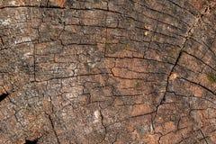 树干被计分的表面纹理背景 免版税库存图片