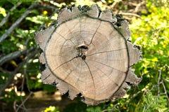 树干裁减 库存照片