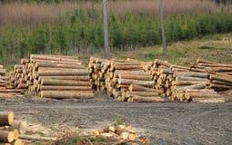 树干装载  免版税库存照片