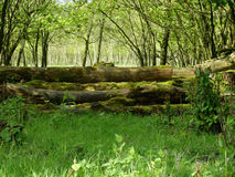 树干长满与青苔 免版税图库摄影