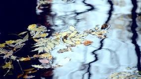 树干黑剪影的反射水表面上的  股票录像