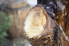 树干,击倒的树,自然 免版税图库摄影