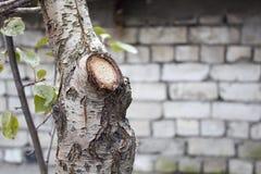 树干,击倒的树 免版税库存照片