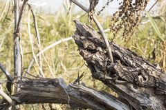 树干,击倒的树 库存照片