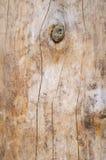 树干 木纹理 库存照片