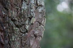 树干细节 库存图片
